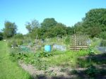 12 By the allotments