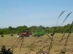 2. Cutting hay