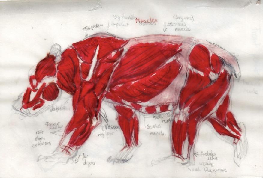 Bear_anatomy_FZ-1