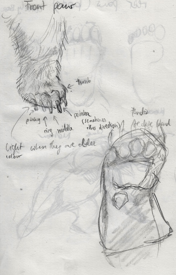 Bear_anatomy_FZ-1 2